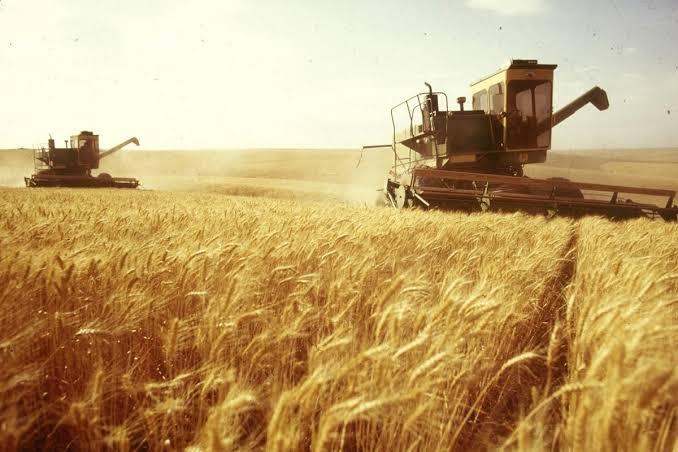 factors for wheat crisis